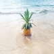 Pineapple On Beach